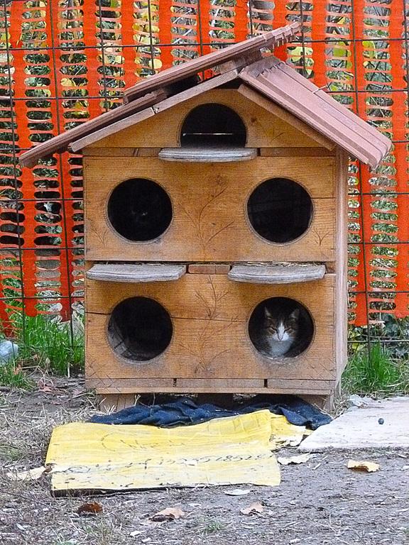 市場に行く途中にあって私が「猫ハウス」と勝手に名付けた場所。買い物の行き帰りに猫たちを見に行っていました