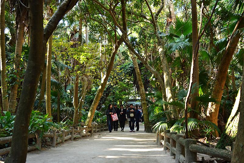 亜熱帯植物が自生している島内。東南アジアのリゾートにでも来ているような気分に