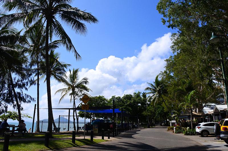 ペーパーバークツリーの大木や椰子の木が道沿いに