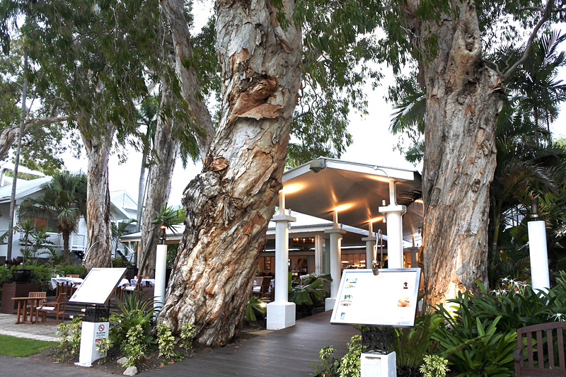 「The Reef House」のエントランスではペーパーバークツリーがお出迎え