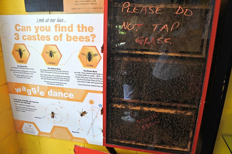 「Honey House Kuranda」ではミツバチたちが働く姿も見られる
