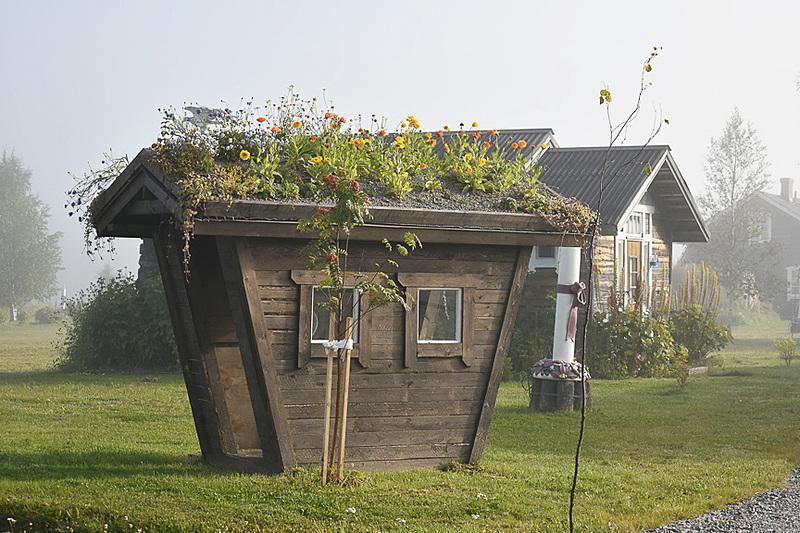 屋根の上がお花畑!