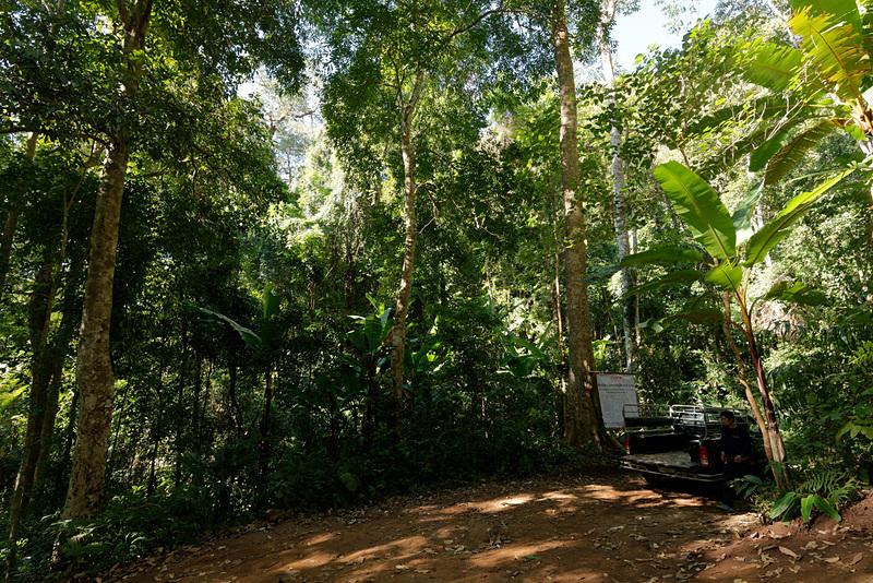 スタート地点付近に到着。完全にジャングル