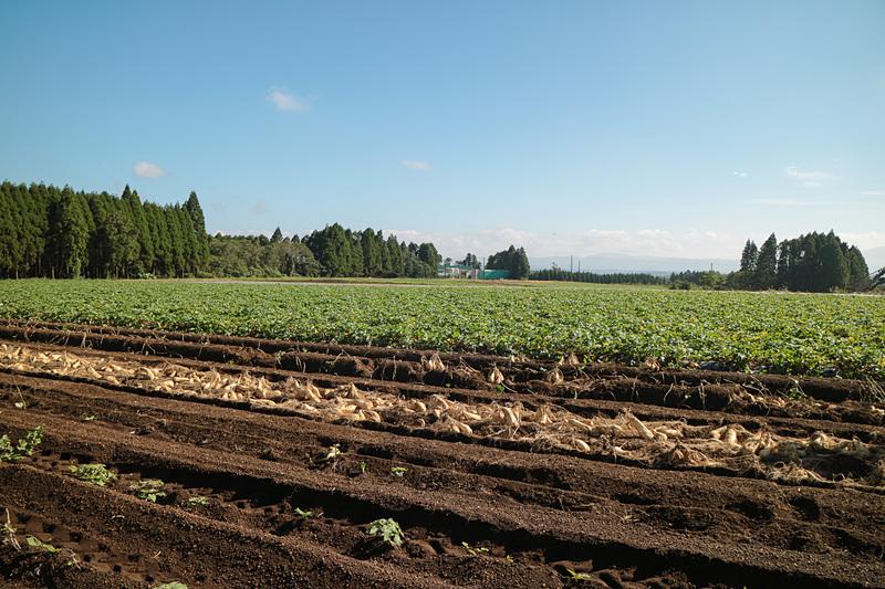 霧島自然農園でサツマイモの芋掘り体験。好天に恵まれたものの、霧島山の方面は残念ながら雲が多く姿を拝むことはできなかった