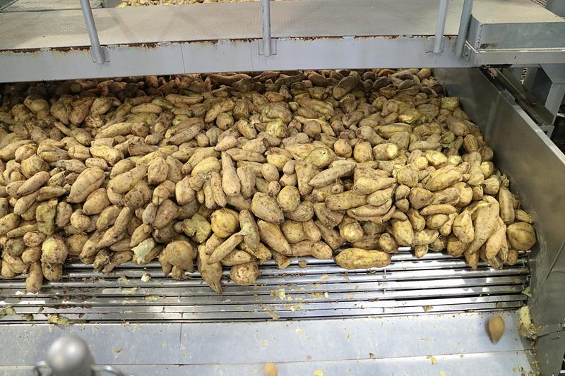 サツマイモは洗浄、選別を経て約1時間かけて蒸し上げられる