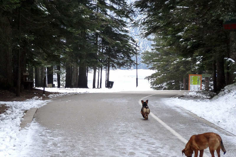 ドゥルミトル国立公園の入り口から黒湖への遊歩道。子供が遊べる遊具などもあり、夏季には家族でのんびりと自然を満喫しながら楽しめそうだ