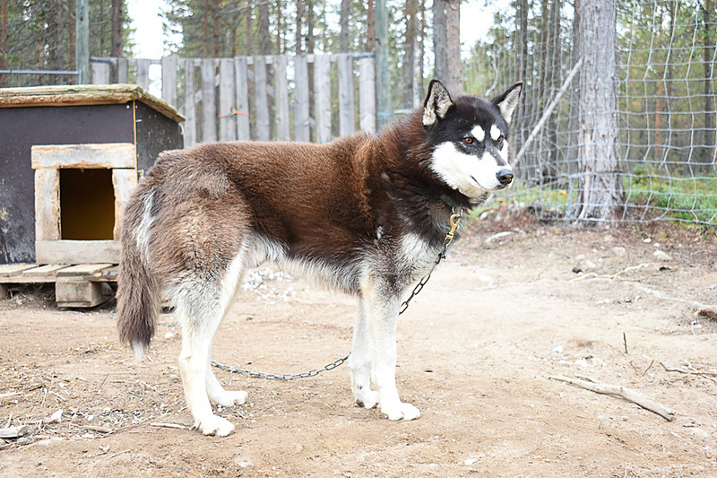 それぞれ性格が違って、この犬は一人でいるのが好きな子なのだとか
