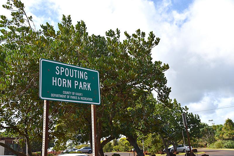 「Spouting Horn Park」の看板からわずか数メートルの場所から「Spouting Horn」を見ることができます