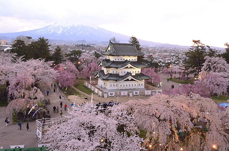 弘前公園の桜(青森県弘前市)