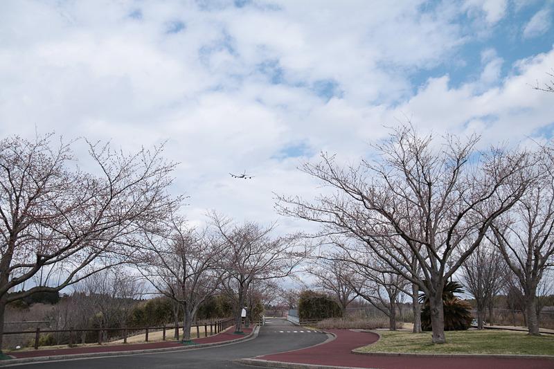 さくらの山から、筆者の取材用機材であるキヤノンのEOS 8000DとEF-S 18-200mmで撮影した写真。桜はまだ蕾が膨らみ始めたところ