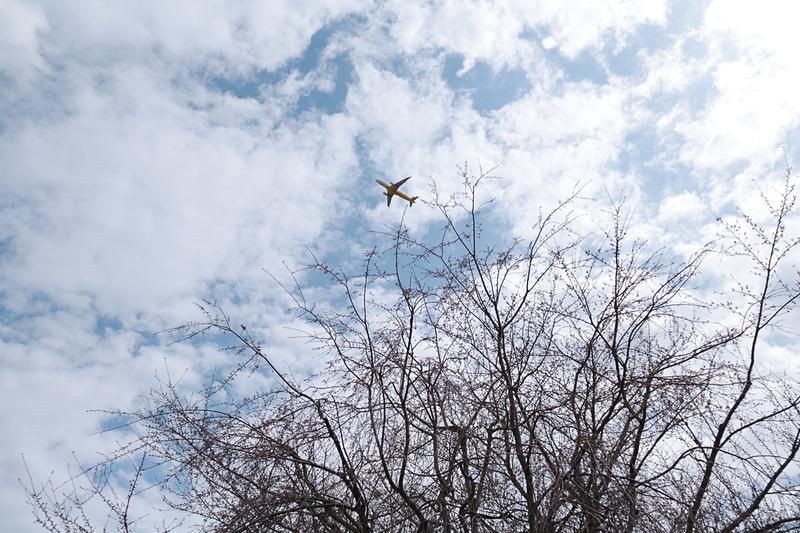 空の駅「さくら館」の外観。さくらの山は、どこからでも見上げれば飛行機が見える