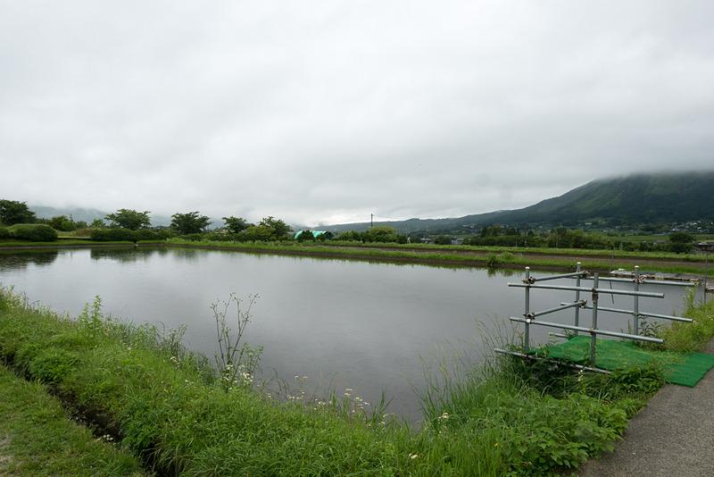 展望デッキの奥にあるこの田んぼでは、ゴールデンウィーク期間中に「たんぼカヤック」が行なわれた