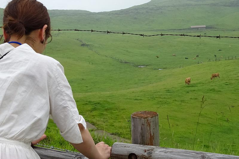 企画会議のレポートでも話があがったとおり、草原が広がる阿蘇は「どこもが展望所」。牛が放牧されている草原の近くに立ち寄って記念撮影