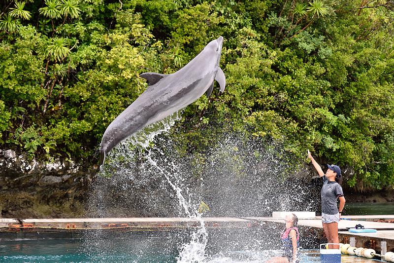 施設で最も大きなイルカの「ジェイ」くんは18歳の男の子。まずはお約束の大ジャーンプ!