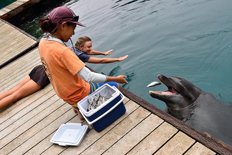 イルカの餌は冷凍のアジ、サバ、イワシなど。生きた魚はと違って水分が少ないので、チューブで真水を飲ませるなどイルカの健康には細心の注意が払われています
