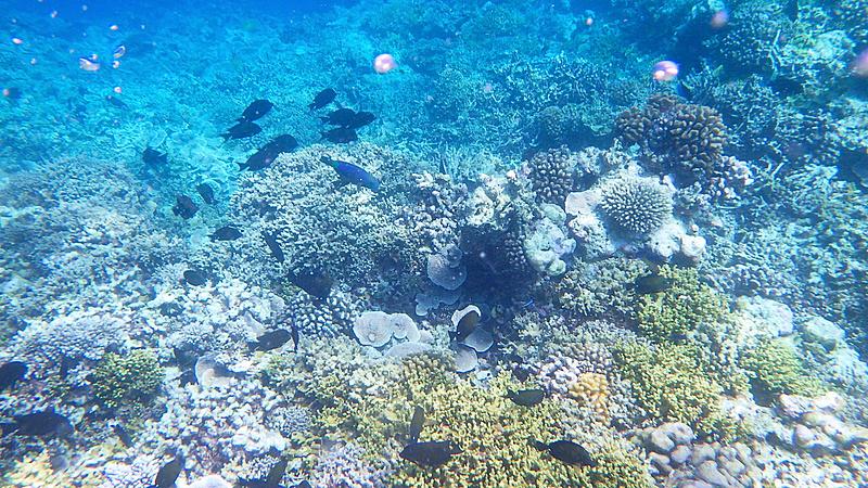 サンゴの数もかなり多い印象