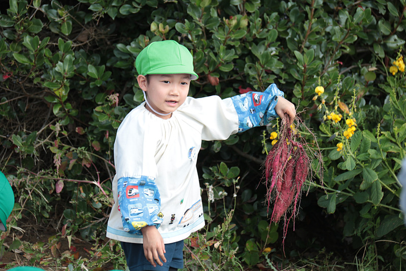 大きなサツマイモを掘り上げたときの、園児たちのうれしそうな表情