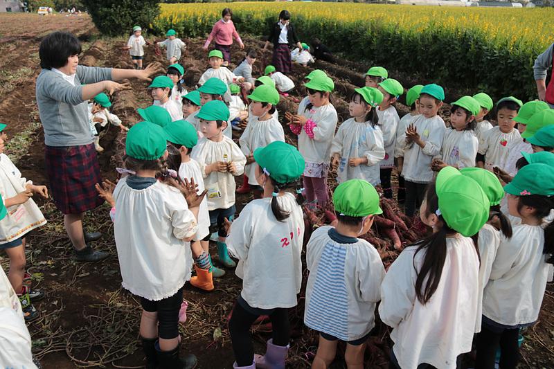 数十分の時間だったが、園児たちが掘り上げたサツマイモは山のように。スタッフによると300~400kgあるのではないかとのこと