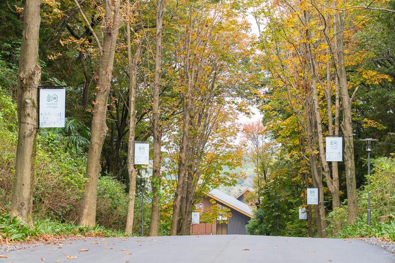 木々に囲まれたエントランスロード。緩やかな坂道の先に建物が見えてきます