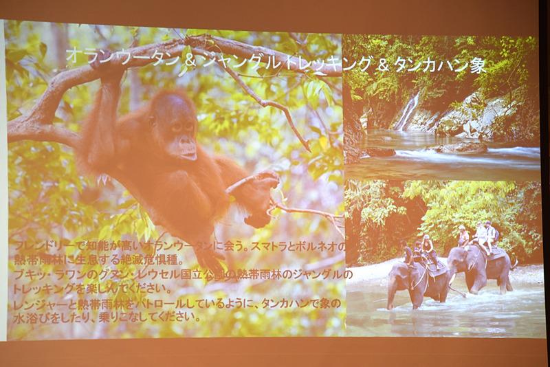 スマトラとボルネオのみで生息するオランウータンの住む熱帯雨林へ