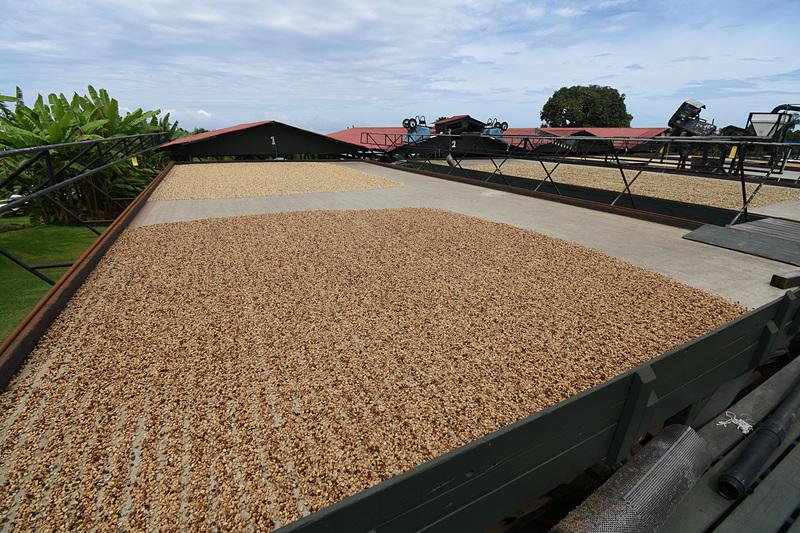 収穫した豆のための「干し棚」