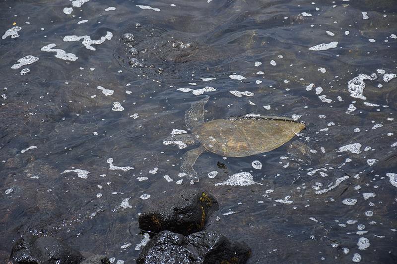 ただし州の条例でウミガメに触るのは厳禁