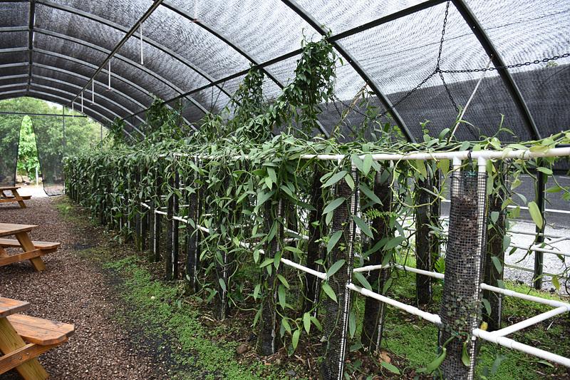 湿度や水やりなどが管理された農園区画を見学できる