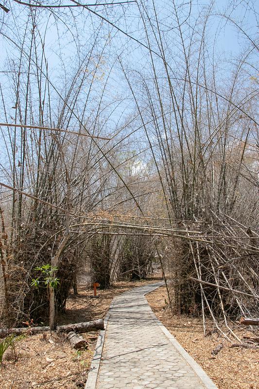 林の中をしばらく歩く
