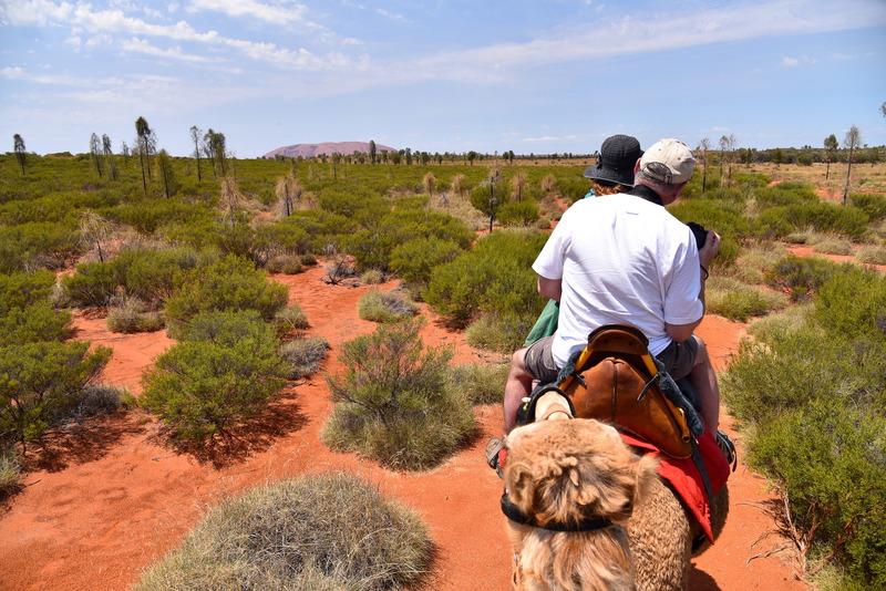出発して数分後緑の向こうにウルルが見えてきた。牧場から約10km先とのこと
