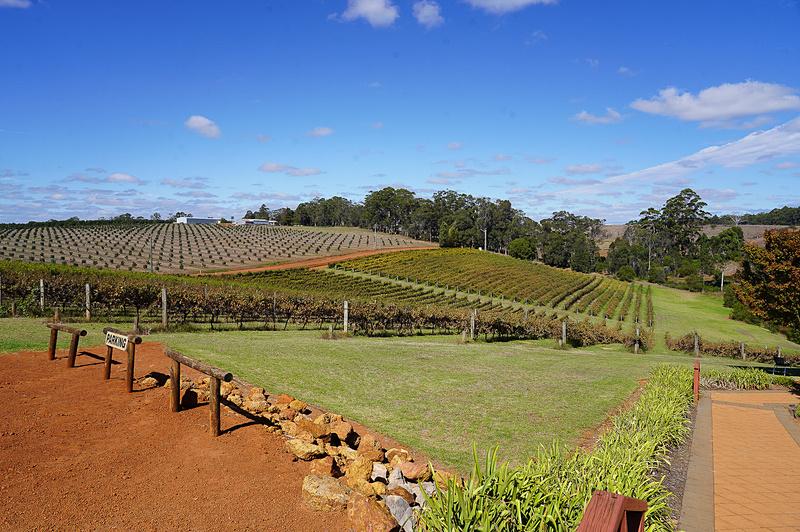 西オーストラリアはプレミアムワインの産地としても知られており、マーガレット・リバーやデンマークなど各地にプレミアムワインを生産するワイナリーが沢山ある