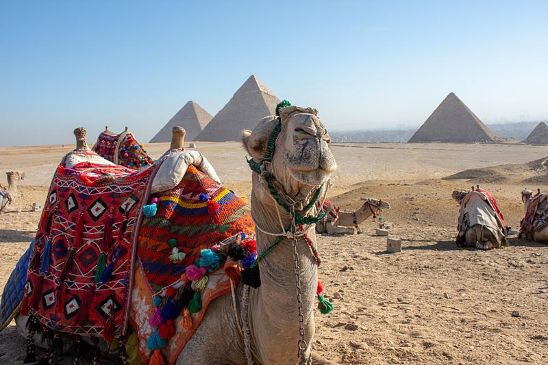 エジプトに行ってきました