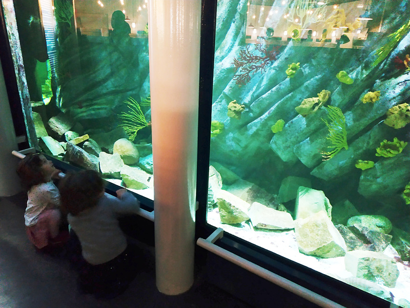 地下には小さいですが水族館も。ここは無料です