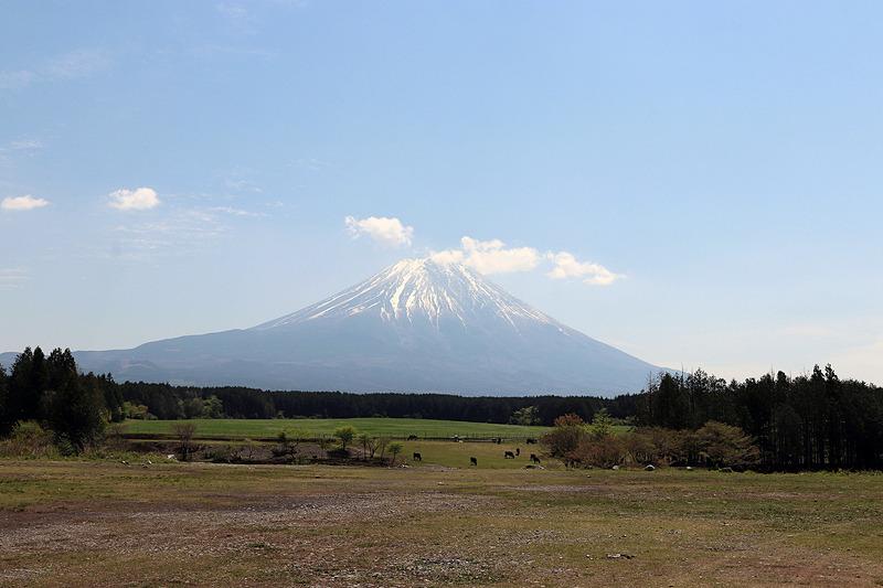 Iサイトから富士山を眺めたところ。キャンプサイトの先には牧場があった