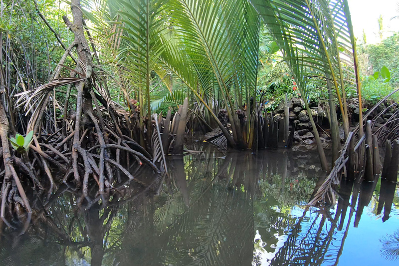 マングローブの森、よく見るとカニがいるかも