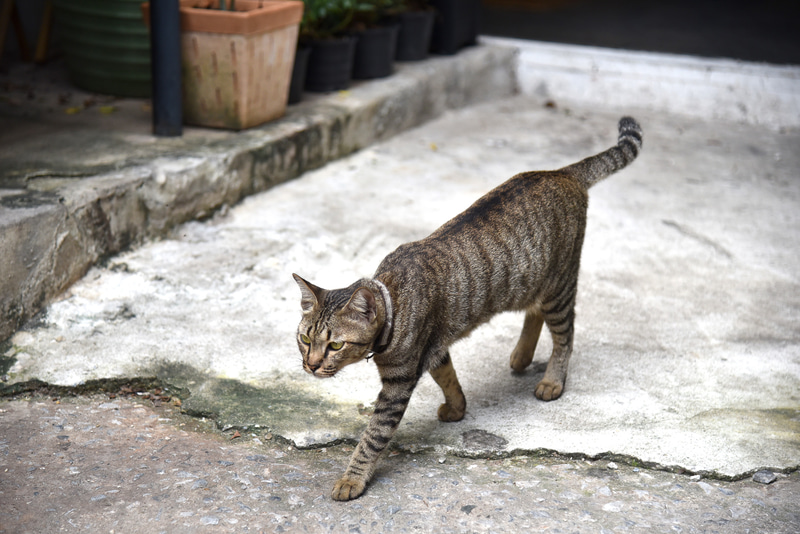 しましま猫ちゃんがお出迎え
