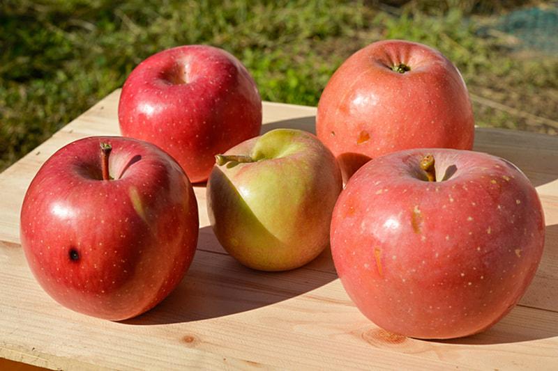 「不揃いりんご」(フジ)を12月14日から全国の無印良品30店舗で発売する