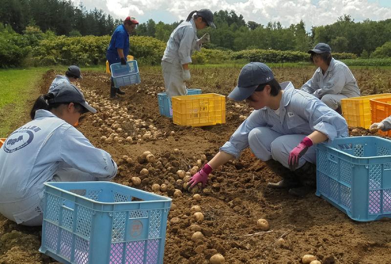 北海道で農業を学ぶ高校生が作った野菜を使用。左上から順に、北海道留寿都高等学校、北海道遠別農業高等学校、北海道大野農業高等学校、北海道倶知安農業高等学校、北海道美幌高等学校での収穫の様子