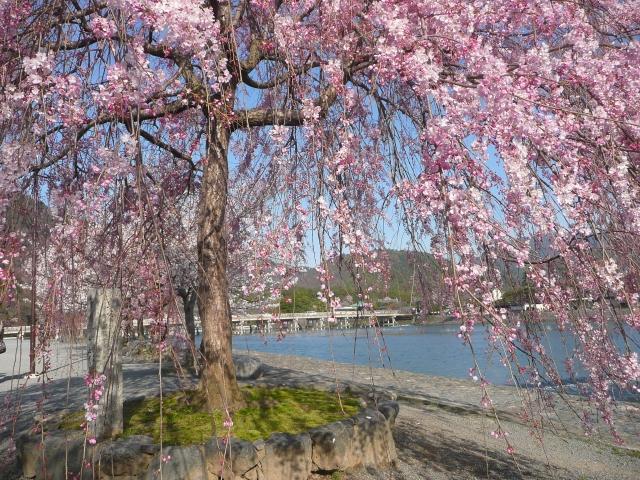 桜でも有名な嵐山