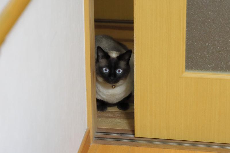 部屋の雰囲気が大きく変わったからか、猫が部屋に入りづらそう