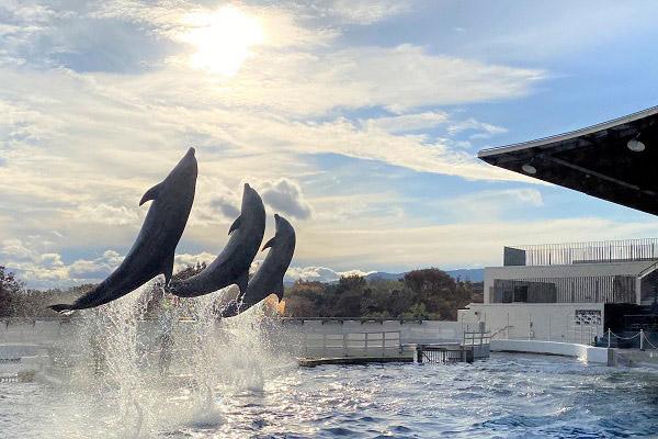 京都水族館は無観客イルカパフォーマンスをライブ配信する