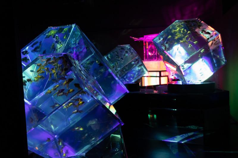 館内は暗闇の中にライティングされた水槽が浮かび上がるようになっており、幻想的な空間を演出している