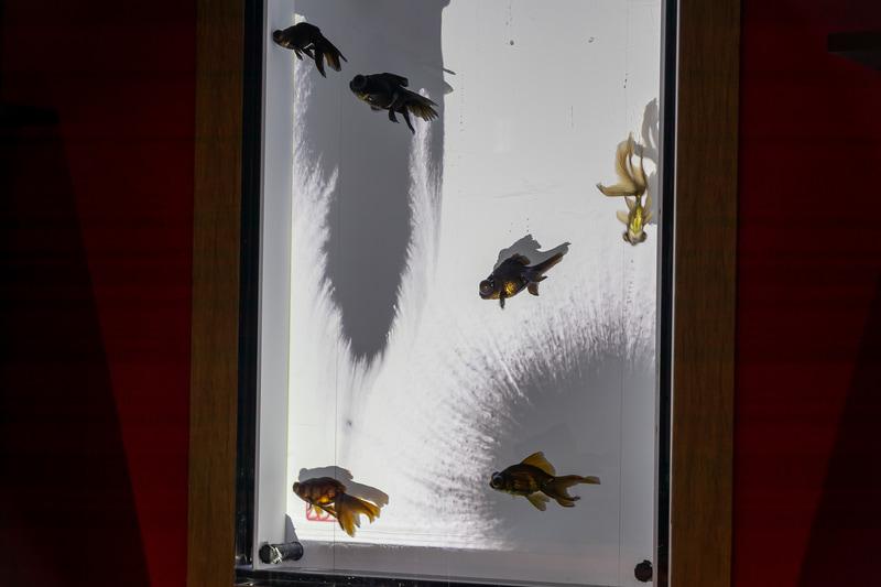 水墨を演出した映像を背景にゆっくりと黒い金魚が泳ぐ
