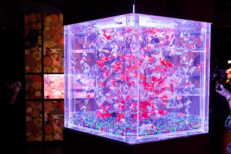 六角柱の水槽「カレイドリウム3D」