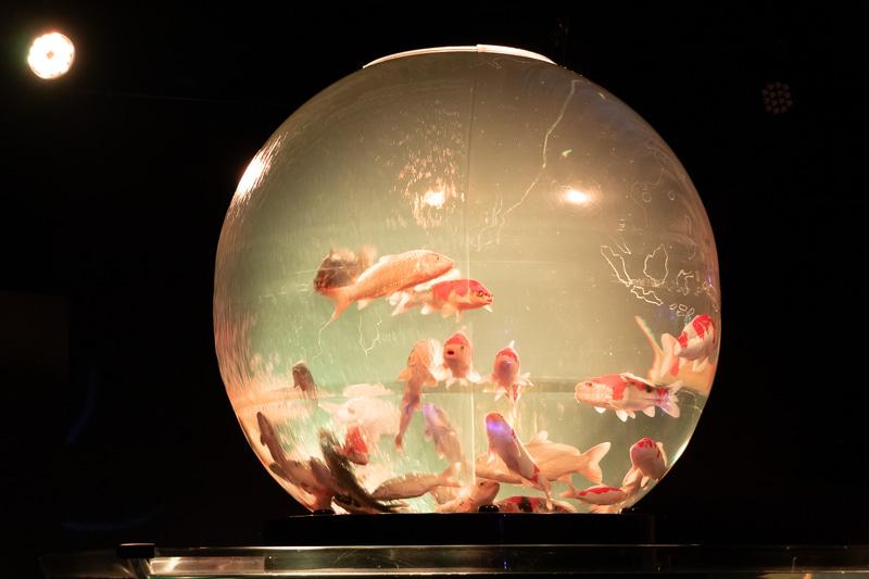 球形の水槽を地球に見立てた「アースアクアリウム・ジャポニズム」