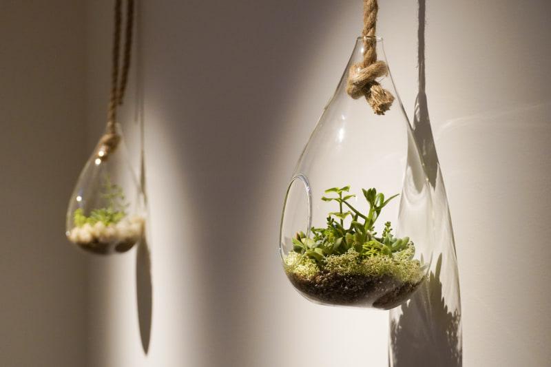 各所に植物が入ったオブジェが飾られている