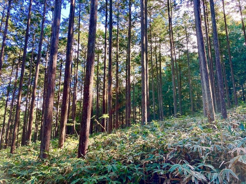 山共は森林レンタルサービス「forenta」を開始した