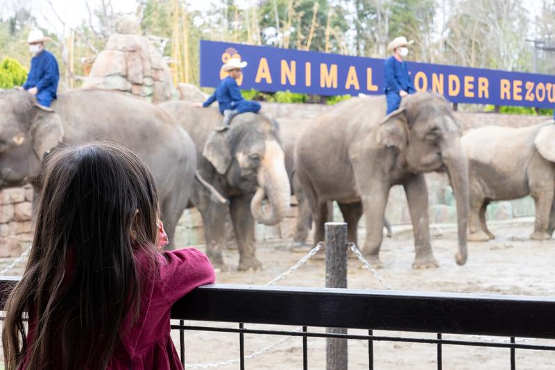 子供も大人もみんなゾウが大好き