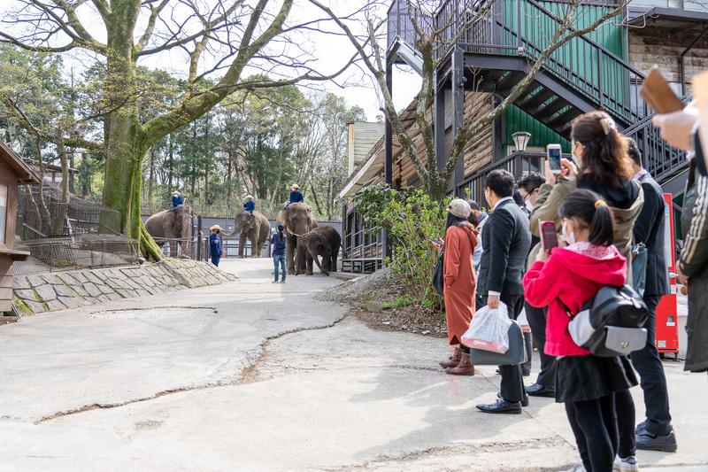 「エレファントビレッジ」からショーに向かうゾウたちを出待ちするお客さん