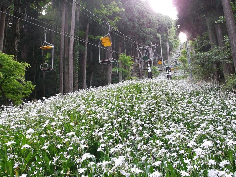 奥伊吹観光は「賤ケ岳リフト」の営業を4月17日に開始する