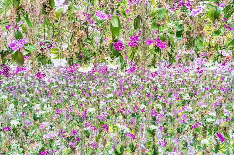 こちらが「Floating Flower Garden:花と我と同根、庭と我と一体」。1万3000株の蘭の花で埋めつくされた異空間は物語のなかに入り込んだかのような錯覚に